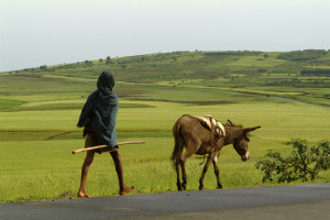 Africa farmer and donkey