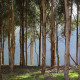 New Forests has bought a blue gum plantation in Victoria