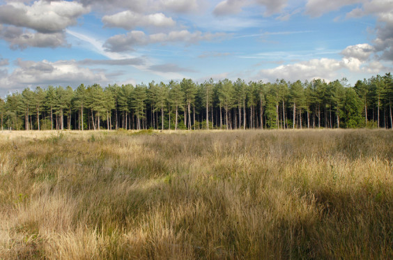 A field of grass and the edge of a managed forest