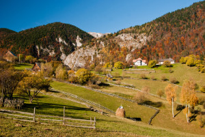 Autumn landscape in Magura village (Romania) with a cow eating grass.
