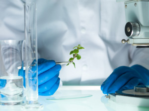 image showing a person's hands in blue rubber glove holding a small leafy plant with tweezers next to a microscope and laboratory glassware