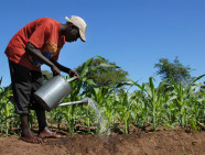 Salima,Malawi- January 12,2011:A farmer watering his field of sugar cane.The population of Malawi are mostly cultivated mainly sugar cane, a mainstay of the country