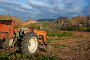 Old tractor on a farm in the Oudtshoorn region of the Western Cape in South Africa