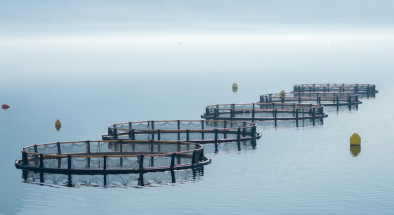 Cages for fish farming in Montenegro