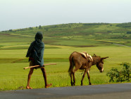 An African man walking with his donkey in Ethiopia