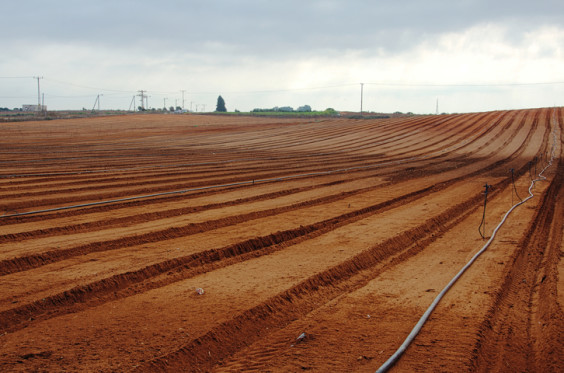 Freshly planted and tilled field ready for new life and growth