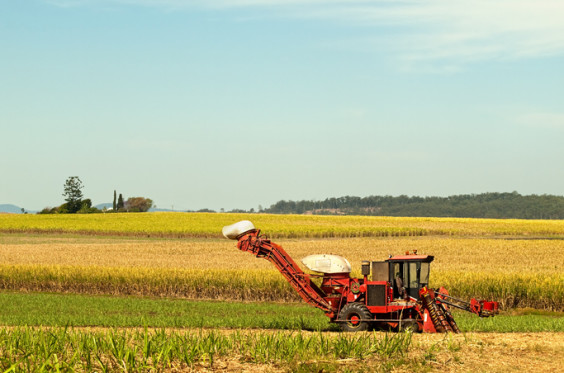 Red Farm machine cane harvester on Australian agriculture land sugarcane plantation